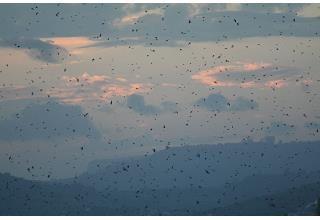 2019 ATTRACTIONS - BARN SWALLOWS MOUNT MORELAND NEAR ...
