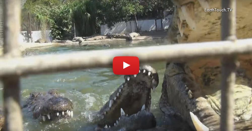 2018 attractions crocodile creef north coast near